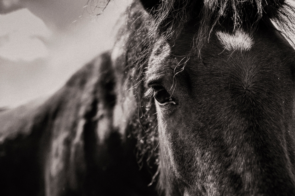 2016-7-pony-silver-agfa-400-84